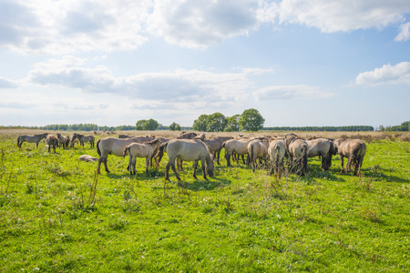 Horses in a meadow in a natural park in summer Imagens