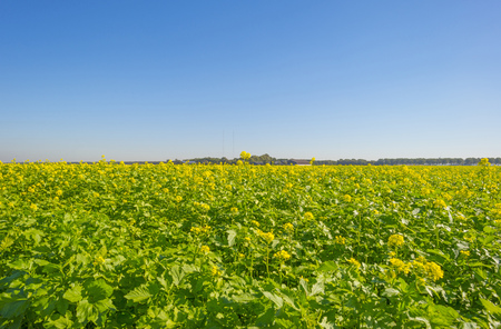 Green farmland with vegetables at a blue sky at fall