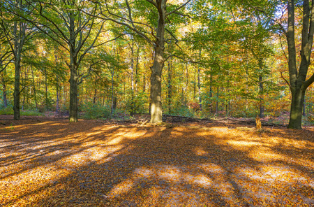 Foliage in a forest in autumn colors in sunlight at fall