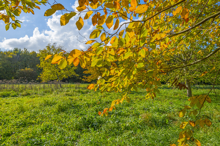 Trees in a field in fall colors in sunlight in autumn Stock Photo