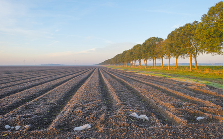 Plowed field along trees at sunrise at fall Stock Photo