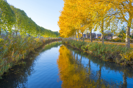 Trees in fall colors along a canal in a residential area in sunlight