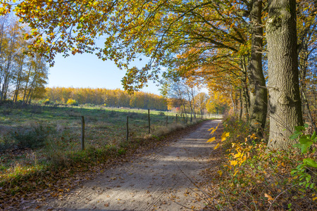 Path in a rural hilly landscape in fall colors in sunlight in autumn