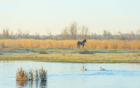Horse in a field in a natural park at sunrise in winter