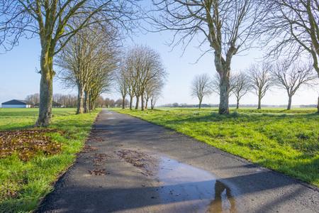Trees along a path in a green field below a blue sky in sunlight in winter Stockfoto
