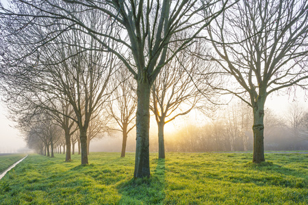 Trees in a green field along a road below a blue sky at sunrise in spring