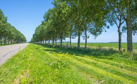 Green trees along a road below a blue sky in summer sunlight Imagens
