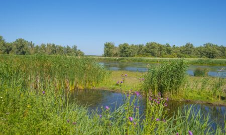 The edge of a pond with a green grassy field below a blue sky in sunlight in summer