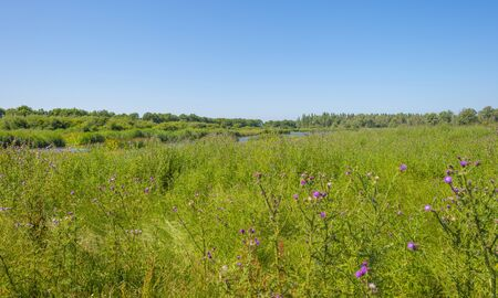 The edge of a pond with a green grassy field below a blue sky in sunlight in summer Stockfoto
