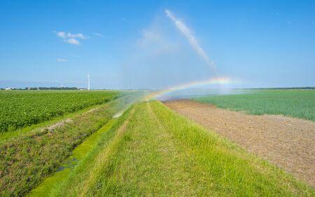 Arc-en-ciel dans un champ avec des légumes irrigués par un arroseur itinérant au soleil en été
