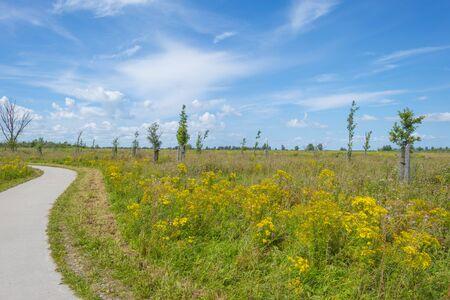 Trees in a green grassy flowery field below a blue cloudy sky in summer
