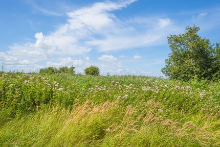 Trees in a green grassy flowery field below a blue cloudy sky in summer Banque d'images - 129568545