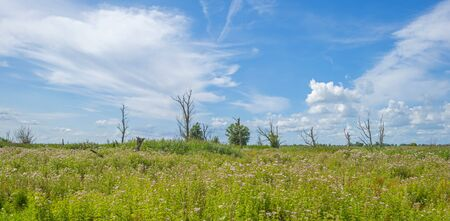 Trees in a green grassy flowery field below a blue cloudy sky in summer Banque d'images - 129568550
