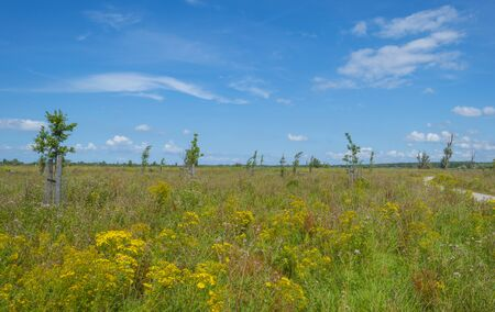 Trees in a green grassy flowery field below a blue cloudy sky in summer Banque d'images - 129568562
