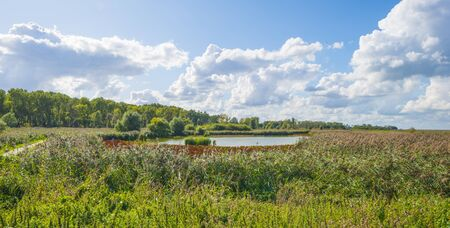 The edge of a pond with a green grassy field below a cloudy blue sky in sunlight in summer Stock Photo