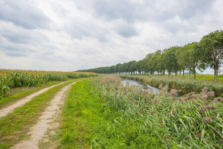 Canal in a field with vegetables below a cloudy sky in summer