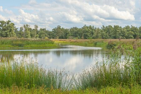 The edge of a pond with a green grassy field below a cloudy blue sky in sunlight in summer