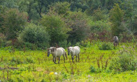 Horses in a field in wetland in summer Imagens