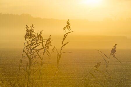 Drove in a foggy field in sunlight at sunrise in summer