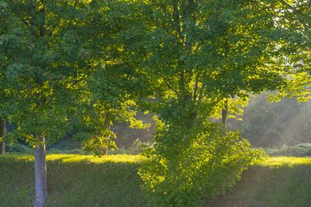 Trees in a foggy field along a road below a blue sky at sunrise in summer
