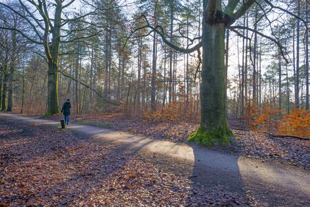 Path in a forest with pines and beeches in sunlight in winter Stock Photo