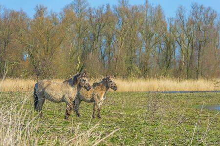 Horses in a field with a horse in a natural park in sunlight in winter Banco de Imagens
