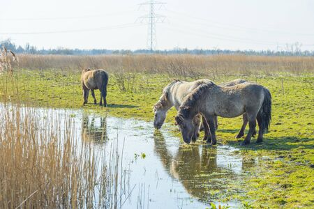 Horses in a field along a lake in a natural park in sunlight in winter Banco de Imagens