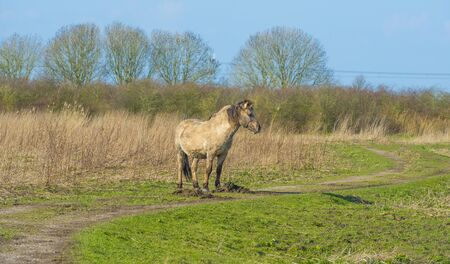 Horse in a field with a horse in a natural park in sunlight in winter Banco de Imagens - 142148164