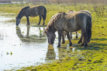 Horses in a field along a lake in a natural park in sunlight in winter Banco de Imagens - 142148165