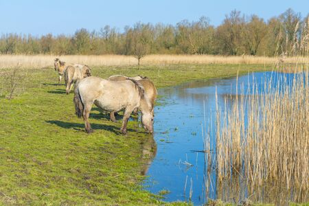 Horses in a field along a lake in a natural park in sunlight in winter Imagens