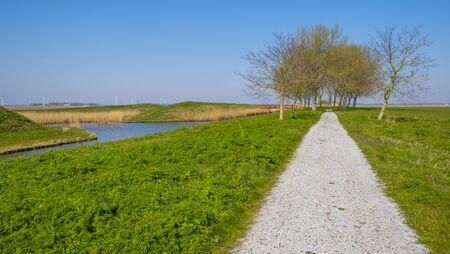 Trees in a green field below a blue sky in sunlight in spring 写真素材