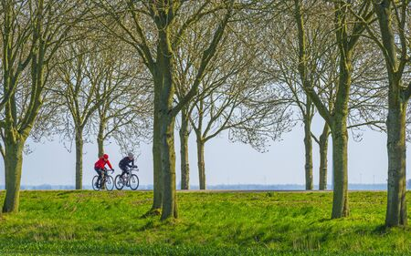 Two cyclists on a road on a green dike along trees in sunlight in spring