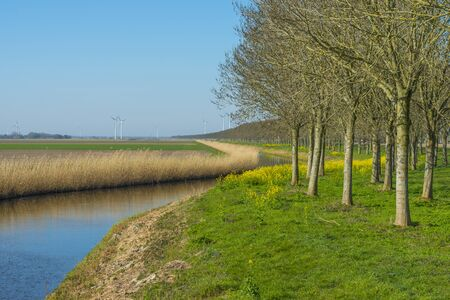 Canal with reed below a blue sky in sunlight in spring