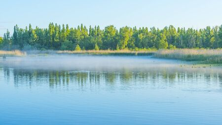 Reed along the edge of a misty lake below a blue sky in sunlight at sunrise in a spring morning Imagens