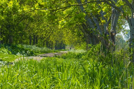 Spring is in the air with the lush green foliage of trees in a green pasture in sunlight Stock Photo