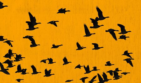 The brilliance of a sparkling yellow canvas with flying birds lit by the sun at a spring day as a decorative background