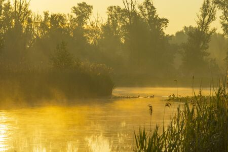 Reed along the edge of a misty lake below a blue yellow sky in sunlight at a yellow foggy sunrise in a spring morning 版權商用圖片