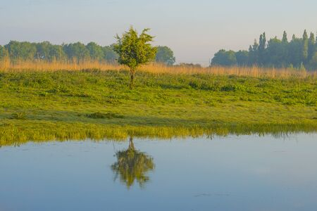 Small tree in a green pasture reflecting in a lake below a blue cloudy sky in sunlight at a spring morning