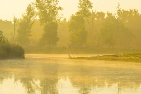 White egret on the edge of a misty lake below a yellow blue sky in sunlight at a foggy sunrise in a spring morning