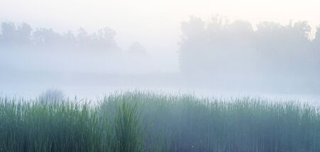 Reed along the edge of a misty lake at a yellow foggy sunrise in an early spring morning Фото со стока