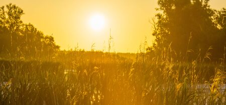Reed along the edge of a sunlit lake at a yellow sunrise in an early spring morning