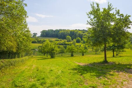 Apple trees in an orchard in a green meadow on the slope of a hill below a blue sky in sunlight in summer Imagens