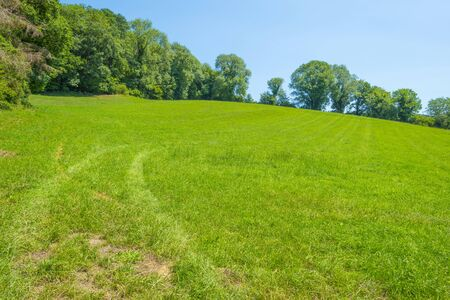 Grassy fields and trees with lush green foliage in green rolling hills below a blue sky in sunlight in summer