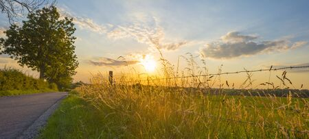 Grassy fields and trees with lush green foliage in green rolling hills below a blue sky in the light of sunset in summer Stock fotó