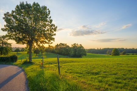 Grassy fields and trees with lush green foliage in green rolling hills below a blue sky in the light of sunset in summer