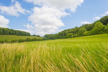 Grassy fields and trees with lush green foliage in green rolling hills below a blue sky in sunlight in summer Фото со стока - 150469096