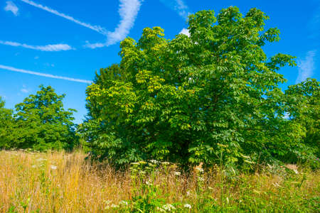 Lush green foliage of trees, yellow grass and wild flowers in a grassy pasture in bright sunlight and shadow on a summer morning, Almere, Flevoland, The Netherlands, July 15, 2020 Stock Photo