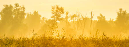 Lush green foliage of trees and yellow and white wild flowers in a misty field at sunrise in an early summer morning, Almere, Flevoland, The Netherlands, July 19, 2020