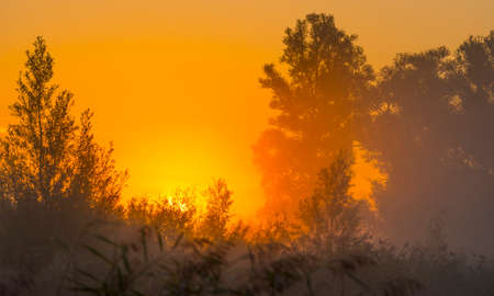 The edge of a misty lake at sunrise in an early bright summer morning with a colorful sky in sunlight, Almere, Flevoland, The Netherlands Stock Photo