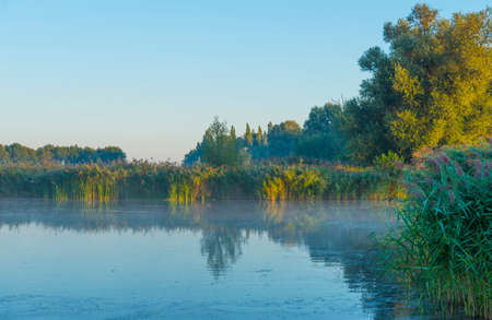 The edge of a misty lake at sunrise in an early bright summer morning with a colorful sky in sunlight, Almere, Flevoland, The Netherlands Standard-Bild